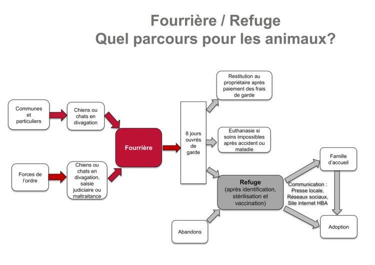 Différence entre fourrière et refuge - Haut Bugey Agglomération